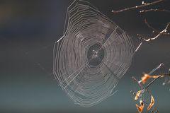 Gibt es im Herbst mehr Spinnennetze als sonst?