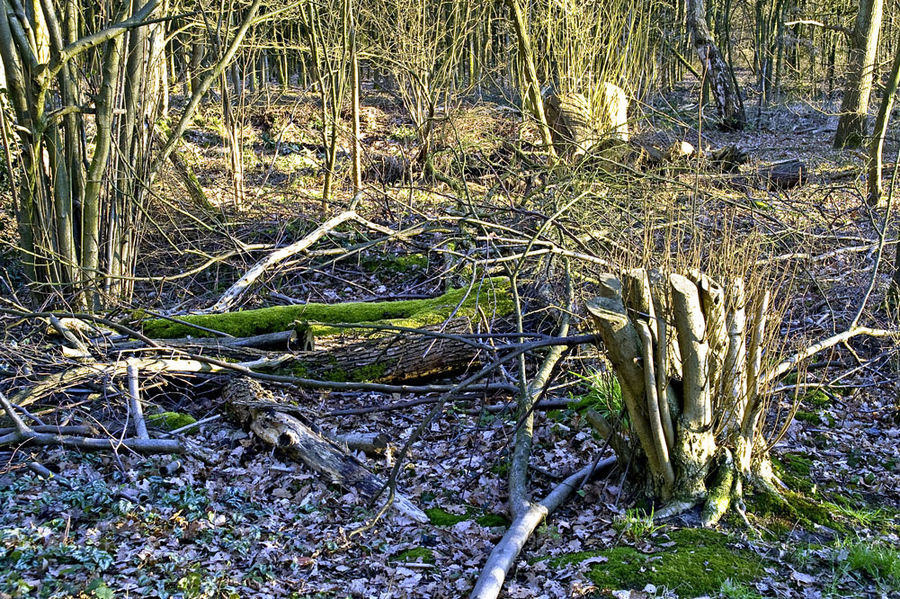 Gierather Wald