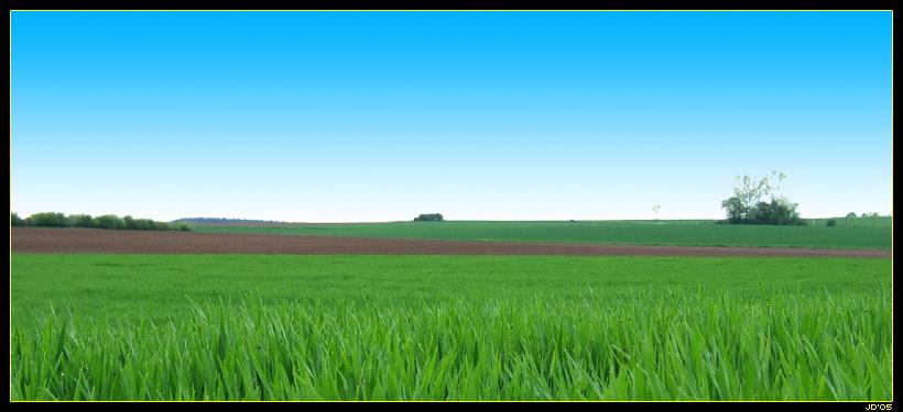 Giftgrünes Gras