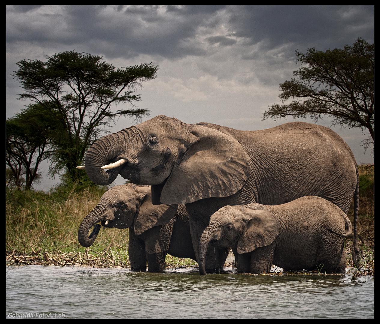 *Giganten Afrikas*