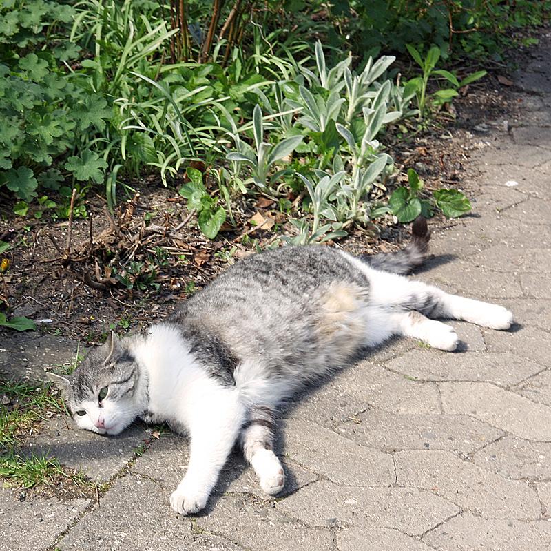 Giletta genießt die Frühlingssonne