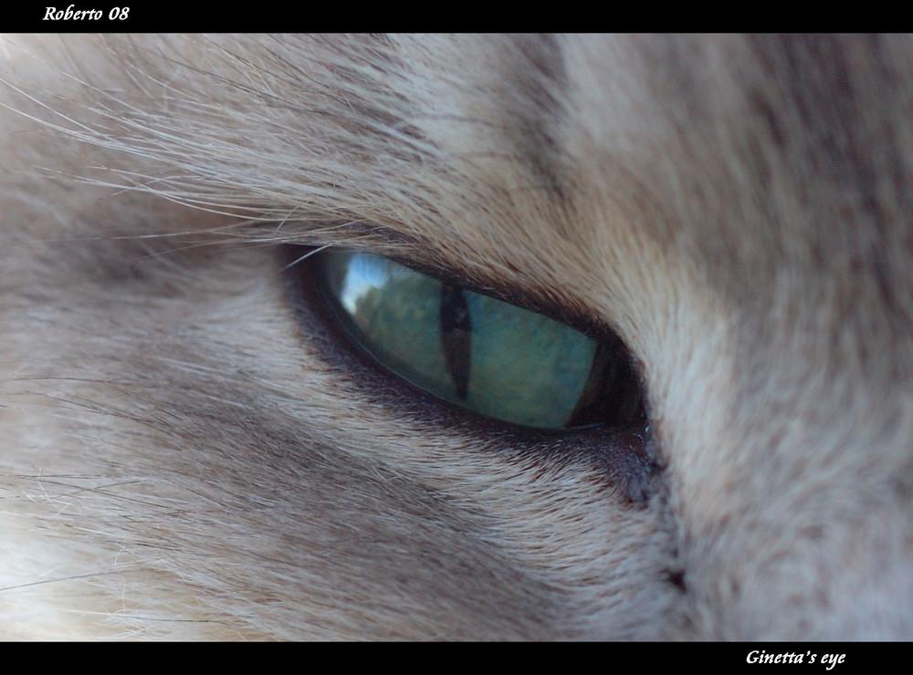 Ginetta's eye.