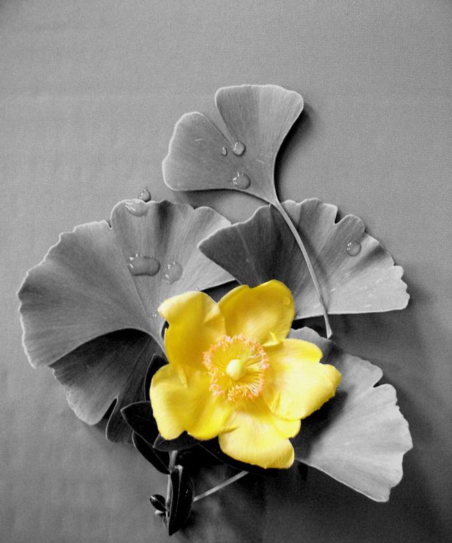 Ginko leaves + *