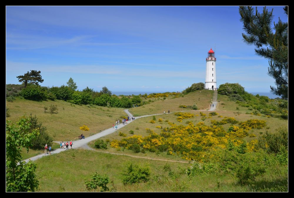 Ginster Leuchtturm Dornbusch