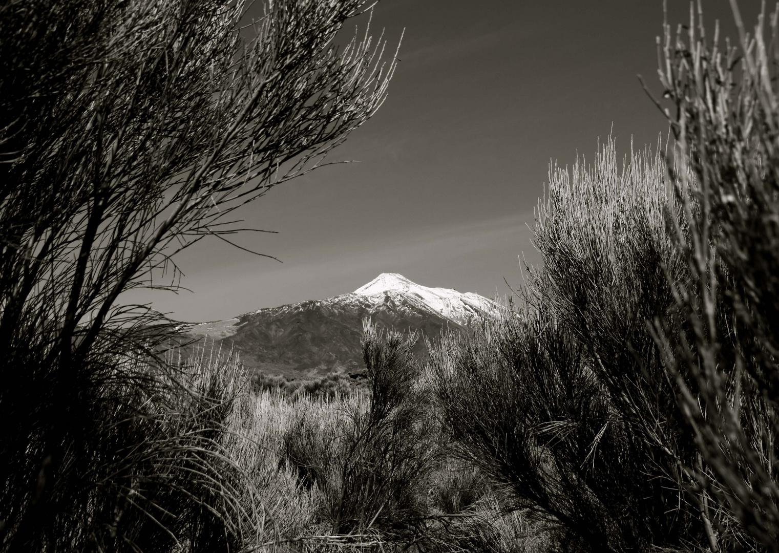 Ginsterdurchblick zum Teide