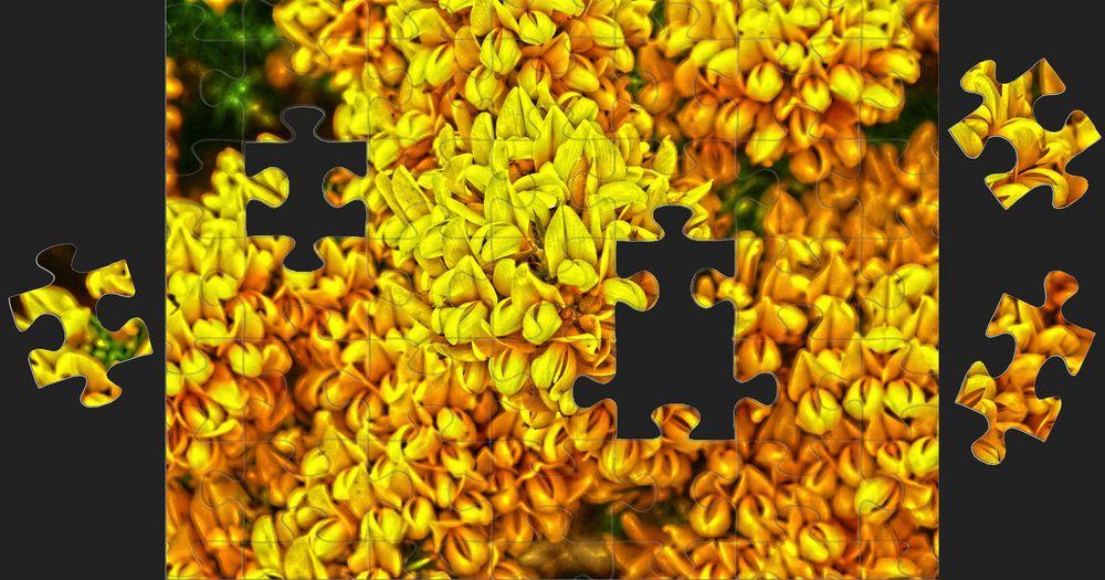Ginsterpuzzle