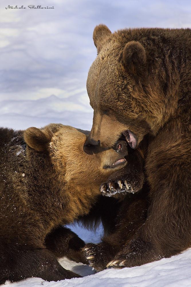 Giochi di orsi