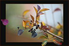 Gioco di foglie