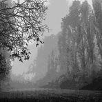 Giorni di nebbia /10