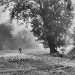 Giorni di nebbia/7