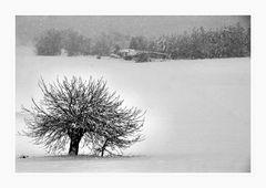 Giorni di neve (2)