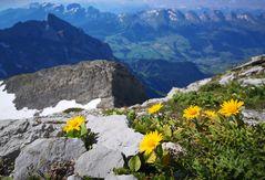 Gipfel-Blumen