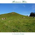 """Gipfelkreuz Köpfle oberhalb der Siede Alpe"""