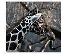 Giraffe Gisela zieht nen Flunsch