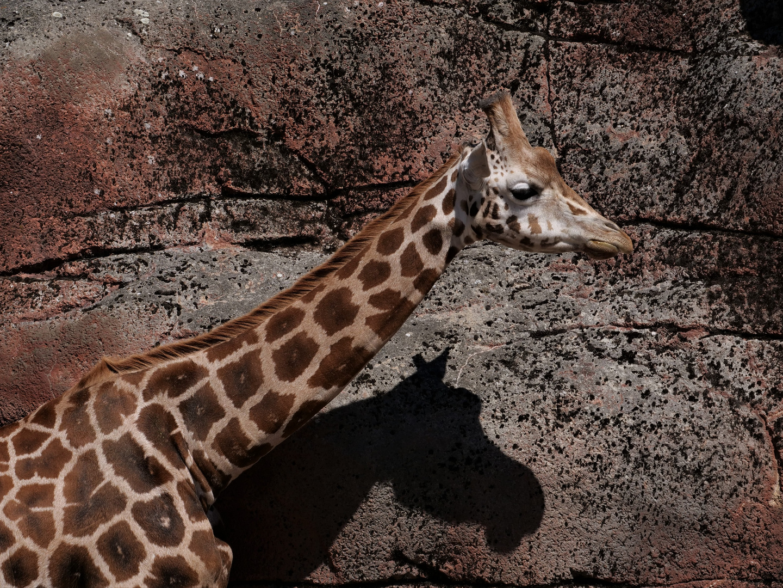 Giraffe oder Elch... ;-)