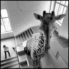 Giraffe/Boy