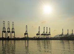 Giraffen am Panamakanal