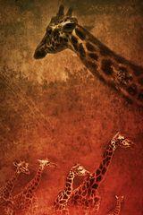 Giraffen - Der Chef und seine Truppe