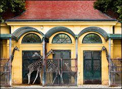 Giraffen - Eine tolle Geschichte...