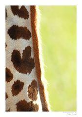 Giraffen-Makro