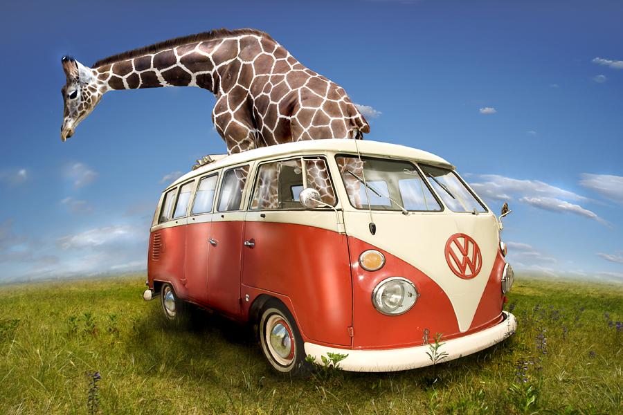Giraffen Safari