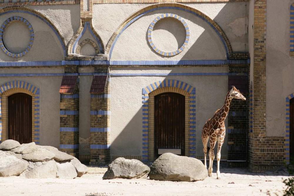 Giraffenhaus im Berliner Zoo