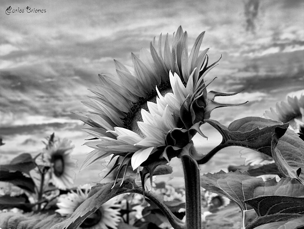Fotos En Blanco Y Negro , Especial