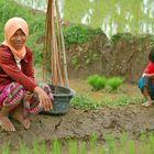 Girls on Ricefields