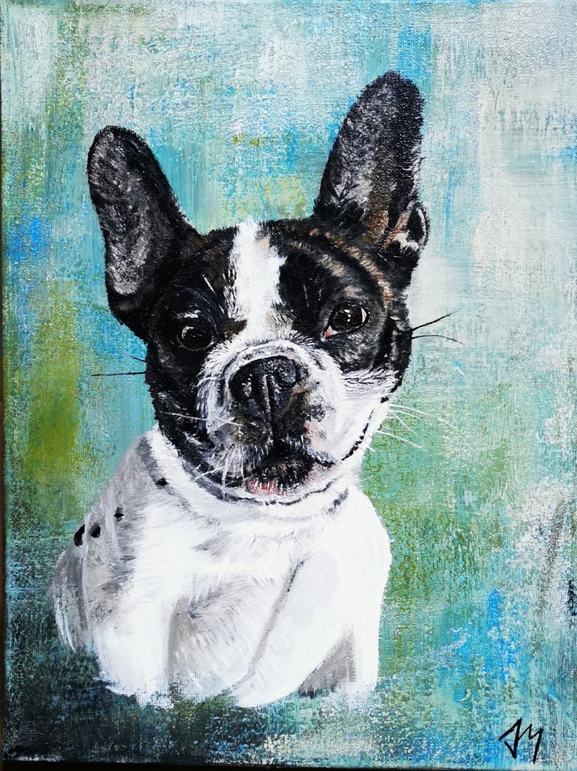 Gismo Französische Bulldogge