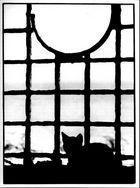 Gitterfenster mit Katze auf Rhodos