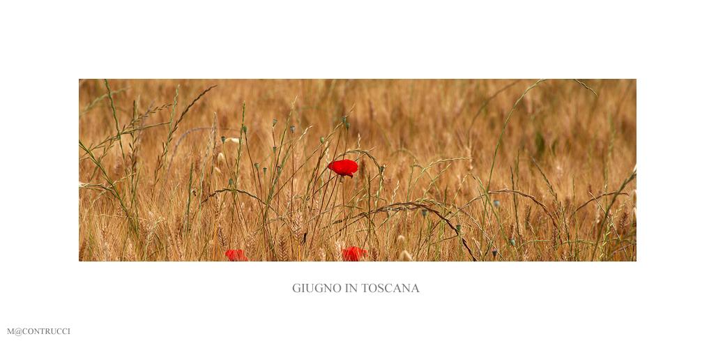 Giugno in Toscana # 5