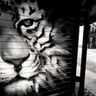 giungla urbana