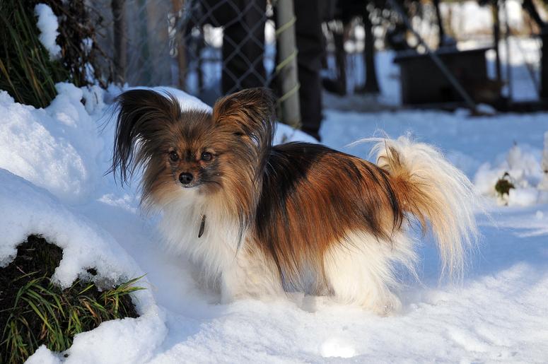 Gizmo im Schnee