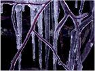 Glacierte Zweige