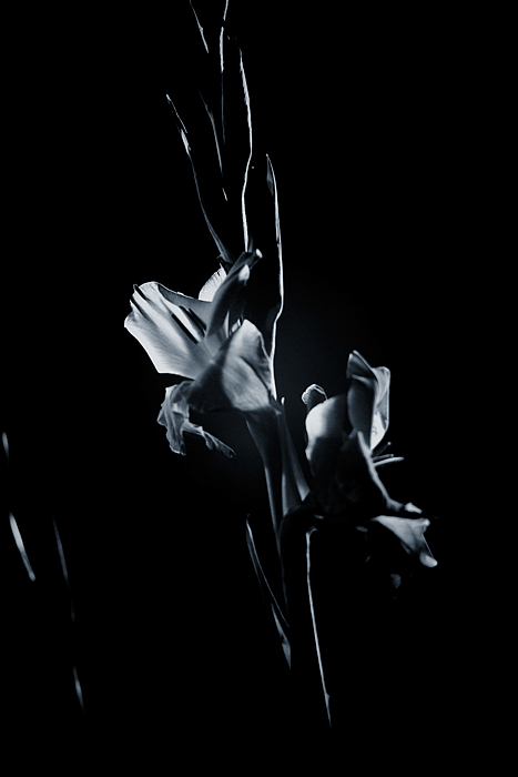 Gladiole 08, I