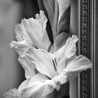 gladiolen in the mirror