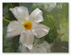 Glas-Blüte