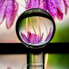 Glaskugelspielerei mit Schachbrettblume