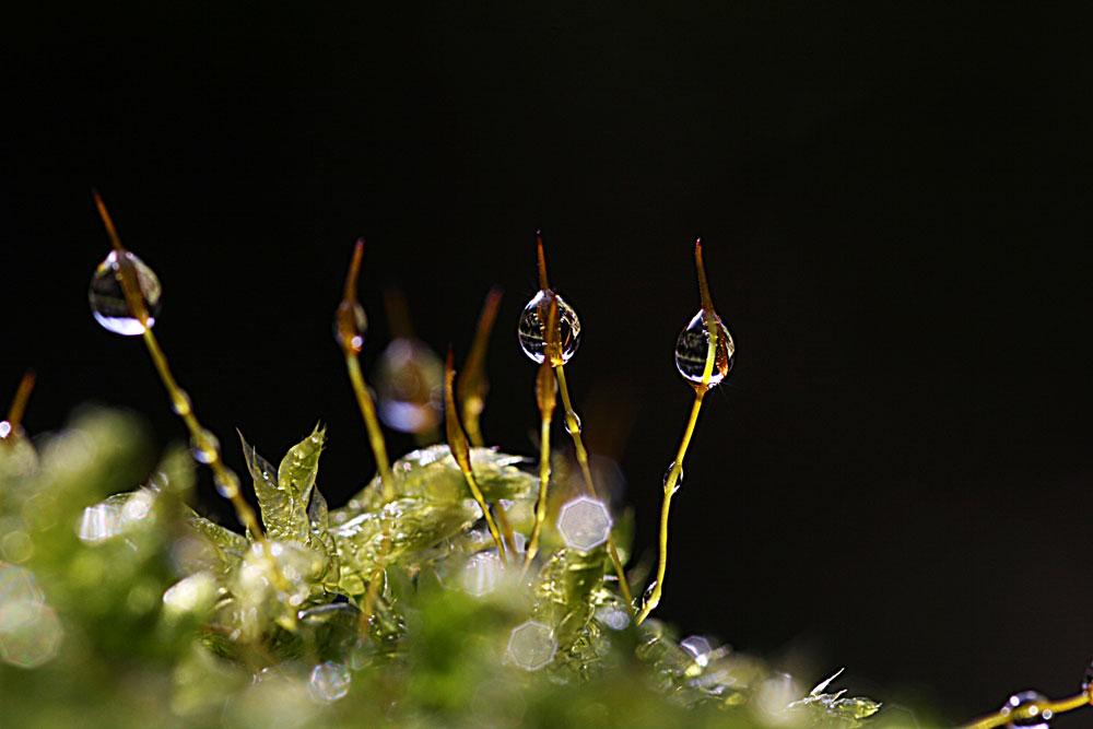 Glasperlen