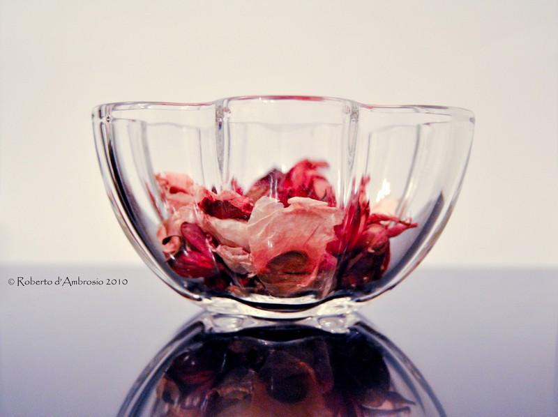 glassandflowers