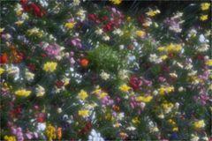 Glasscheibe vor Blumenbeet