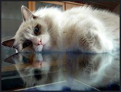 Glastischlein, Glastischlein, ...