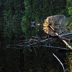 Glaswaldsee - Mikado