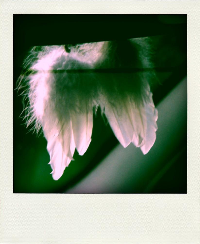 Glaubst Du auch an Engel?