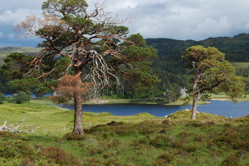 Glen affric (Ecosse)