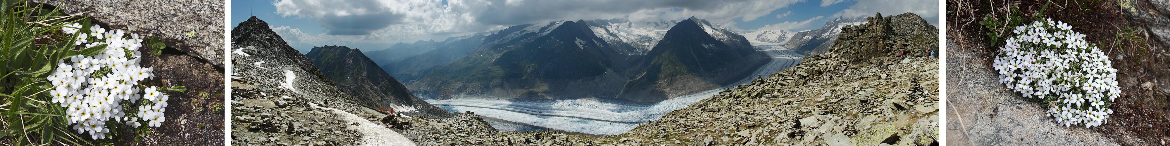 Gletscher-Mannsschild am Aletschgletscher