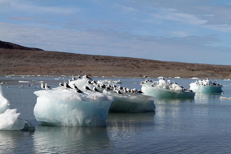 Gletscherabbrüche vom 14.Juli-Gletscher