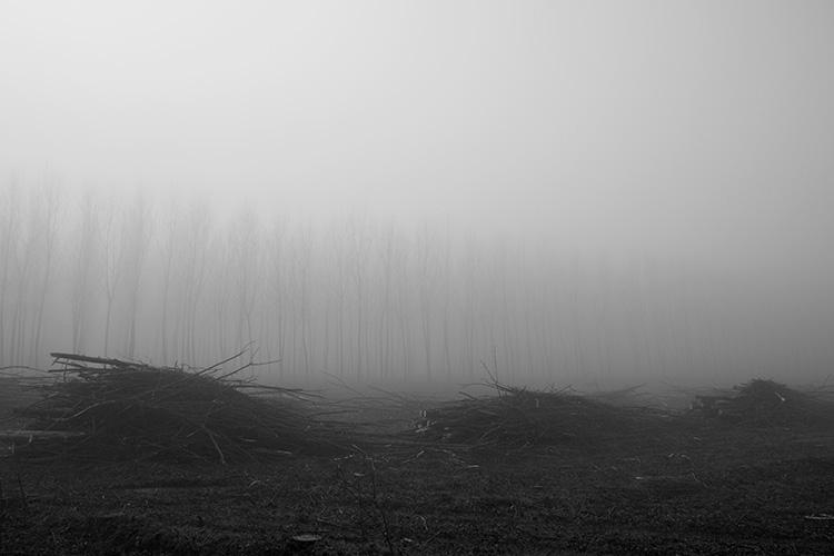 Gli alberi di John Berger -15