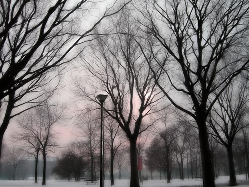 gli alberi e l'inverno