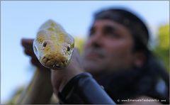 Gli occhi del serpente